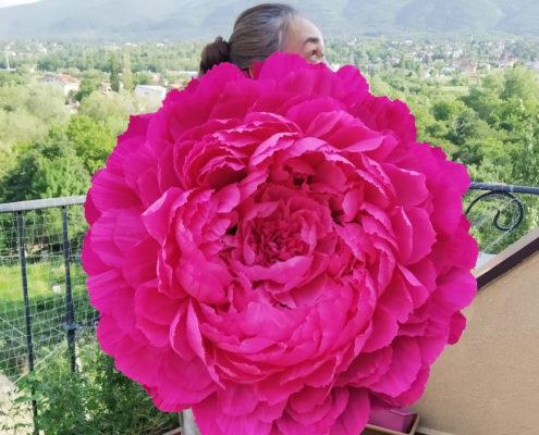 Fleurs en papier : pivoine fuchsia géante