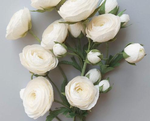 Renoncules blanches pour composition florale