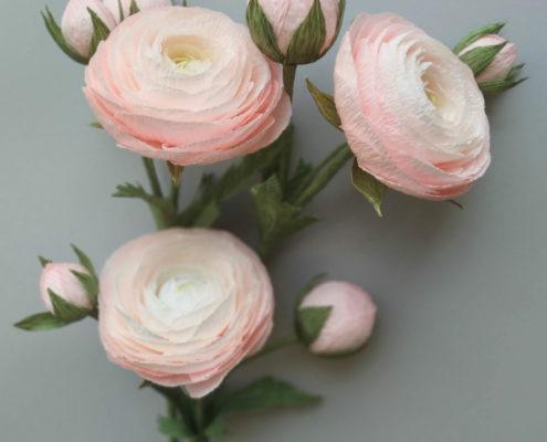 Renoncules roses en dégradé