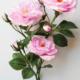 Roses de Damas pour vase