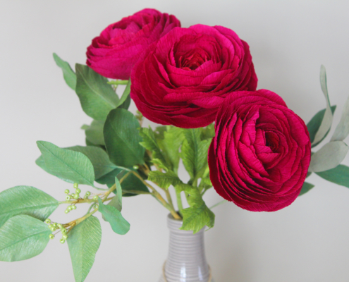 Burgundy red paper ranonculus